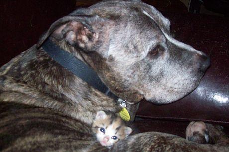 Besondere Hunderassen - Besondere Hunderassen