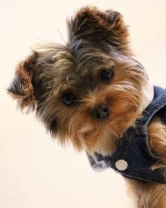 Bilder Über Hunde 240x300 - Bilder Über Hunde