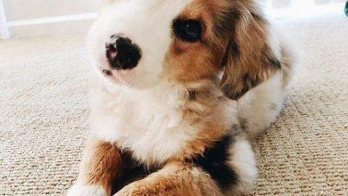 Bilder Über Hunde Für Facebook 390x220 - Bilder Über Hunde Für Facebook