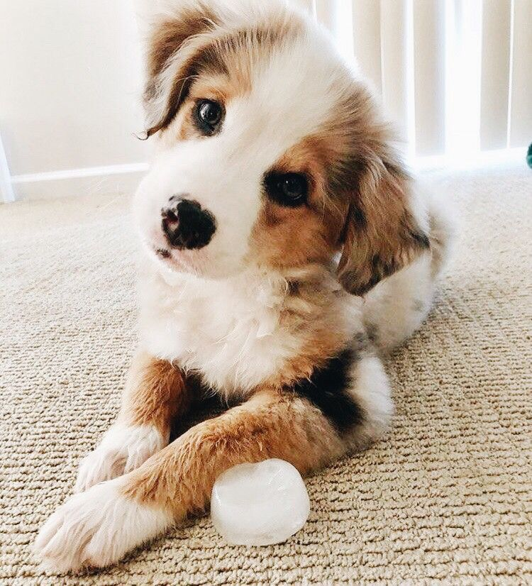 Bilder Über Hunde Für Facebook - Bilder Über Hunde Für Facebook
