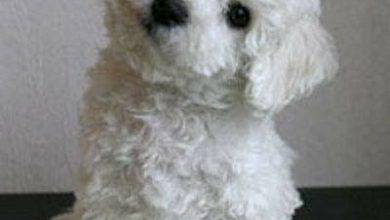 Bilder Über Hunde Kostenlos 390x220 - Bilder Über Hunde Kostenlos
