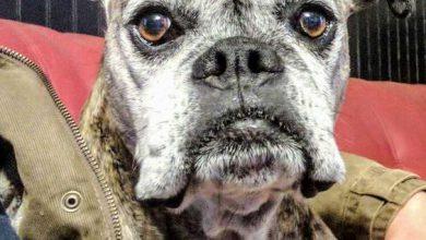 Bilder Über Hunde Kostenlos Herunterladen 390x220 - Bilder Über Hunde Kostenlos Herunterladen