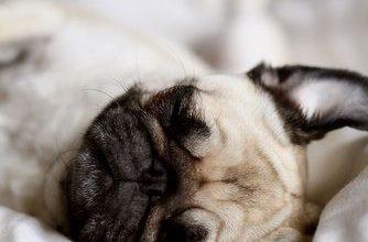 Bilder Große Hunde Für Facebook 334x220 - Bilder Große Hunde Für Facebook