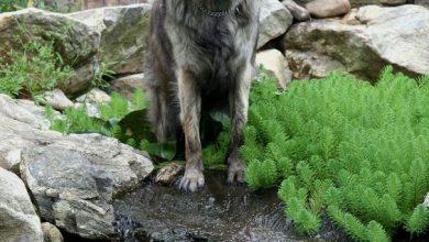 Bilder Große Hunde Für Whatsapp 390x220 - Bilder Große Hunde Für Whatsapp