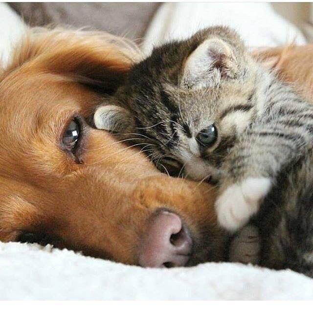 Bilder Grosse Hunde Kostenlos Herunterladen Bilder Und Spruche Fur Whatsapp Und Facebook Kostenlos