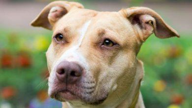 Bilder Hunde Für Facebook 390x220 - Bilder Hunde Für Facebook