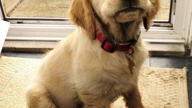 Bilder Hunde Kostenlos 390x220 - Bilder Hunde Kostenlos