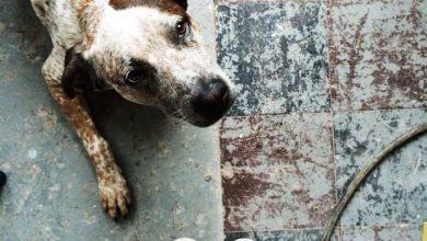 Bilder Hunde Lustig Für Facebook 390x220 - Bilder Hunde Lustig Für Facebook