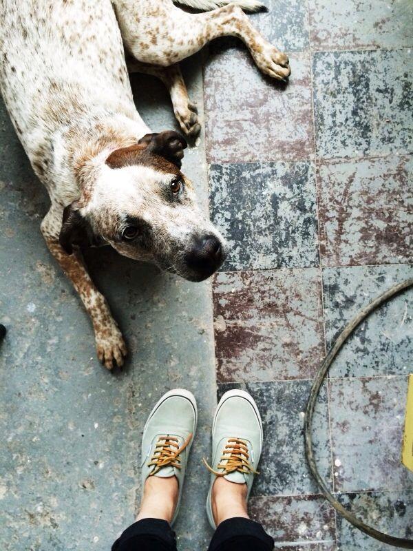 Bilder Hunde Lustig Für Facebook - Bilder Hunde Lustig Für Facebook