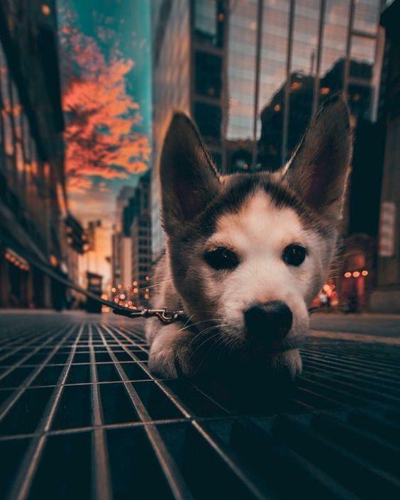 Bilder Hunde Lustig Für Whatsapp - Bilder Hunde Lustig Für Whatsapp