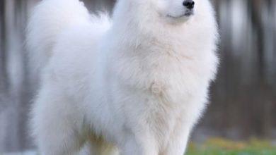 Bilder Hunde Lustig Kostenlos 390x220 - Bilder Hunde Lustig Kostenlos