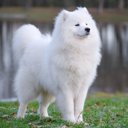 Bilder Hunde Lustig Kostenlos - Bilder Hunde Lustig Kostenlos