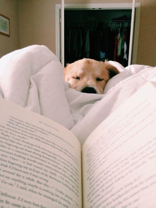 Bilder Hunde - Bilder Hunde
