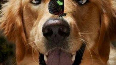 Bilder Hundebabys Für Facebook 390x220 - Bilder Hundebabys Für Facebook