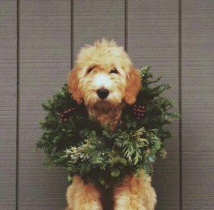 Bilder Hundewelpen Für Facebook 300x294 - Bilder Hundewelpen Für Facebook