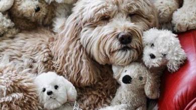 Bilder Hundewelpen Für Whatsapp 390x220 - Bilder Hundewelpen Für Whatsapp