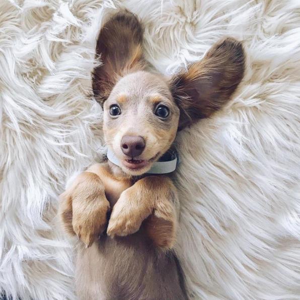 Bilder Hundewelpen Kostenlos Herunterladen - Bilder Hundewelpen Kostenlos Herunterladen