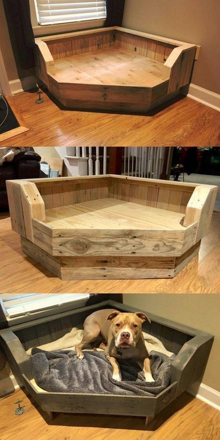 Bilder Hundewelpen Kostenlos - Bilder Hundewelpen Kostenlos