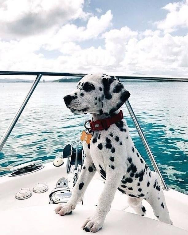 Bilder Hundewelpen - Bilder Hundewelpen