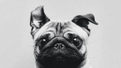 Bilder Jagdhunde Für Facebook 390x220 - Bilder Jagdhunde Für Facebook