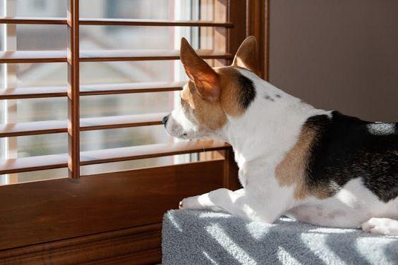 Bilder Jagdhunde Für Whatsapp - Bilder Jagdhunde Für Whatsapp