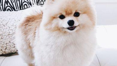 Bilder Kleine Hunde Kostenlos 390x220 - Bilder Kleine Hunde Kostenlos