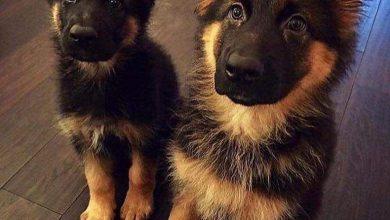 Bilder Kleine Hunde Kostenlos Herunterladen 390x220 - Bilder Kleine Hunde Kostenlos Herunterladen