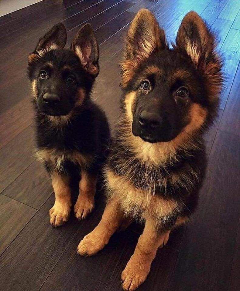 Bilder Kleine Hunde Kostenlos Herunterladen - Bilder Kleine Hunde Kostenlos Herunterladen