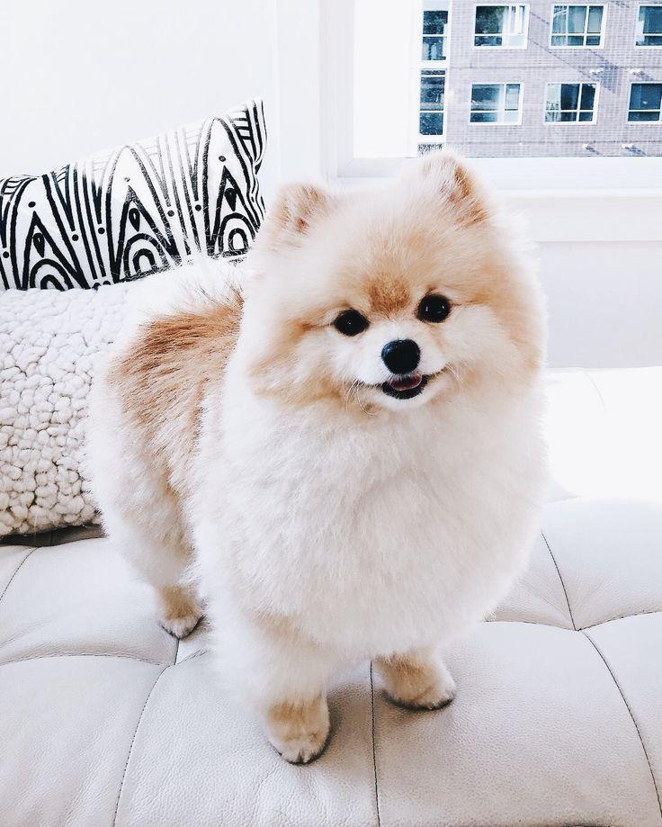 Bilder Kleine Hunde Kostenlos Bilder Und Spruche Fur Whatsapp Und Facebook Kostenlos