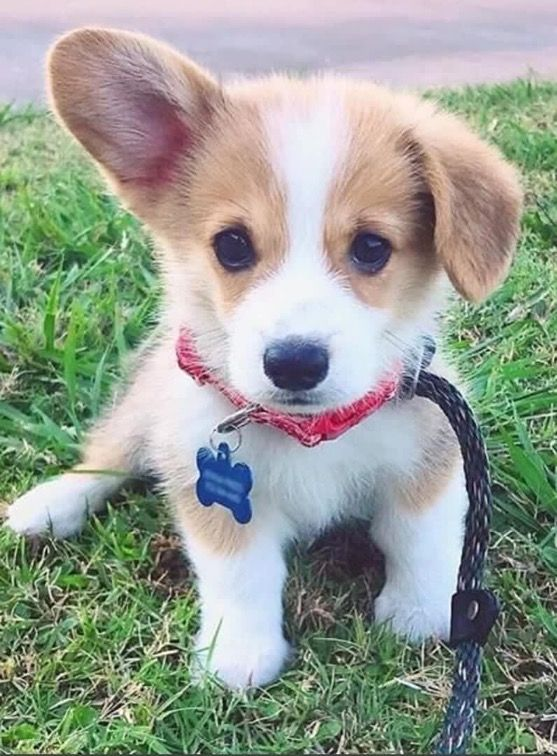 Bilder Kleine Hunderassen Für Facebook - Bilder Kleine Hunderassen Für Facebook