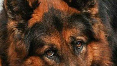 Bilder Kleine Hunderassen Für Whatsapp 390x220 - Bilder Kleine Hunderassen Für Whatsapp