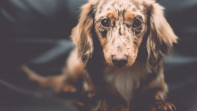 Bilder Mischlingshunde 390x220 - Bilder Mischlingshunde