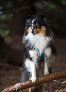 Bilder Mischlingshunde Für Facebook 215x300 - Bilder Mischlingshunde Für Facebook