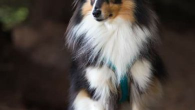 Bilder Mischlingshunde Für Facebook 390x220 - Bilder Mischlingshunde Für Facebook