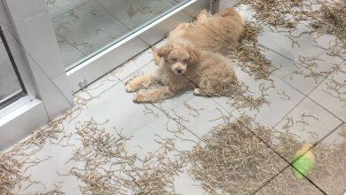 Bilder Mischlingshunde Kostenlos 390x220 - Bilder Mischlingshunde Kostenlos