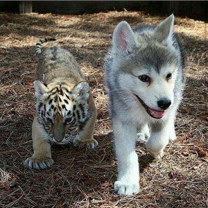 Bilder Mischlingshunde Kostenlos Herunterladen 300x300 - Bilder Mischlingshunde Kostenlos Herunterladen