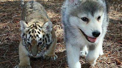 Bilder Mischlingshunde Kostenlos Herunterladen 390x220 - Bilder Mischlingshunde Kostenlos Herunterladen