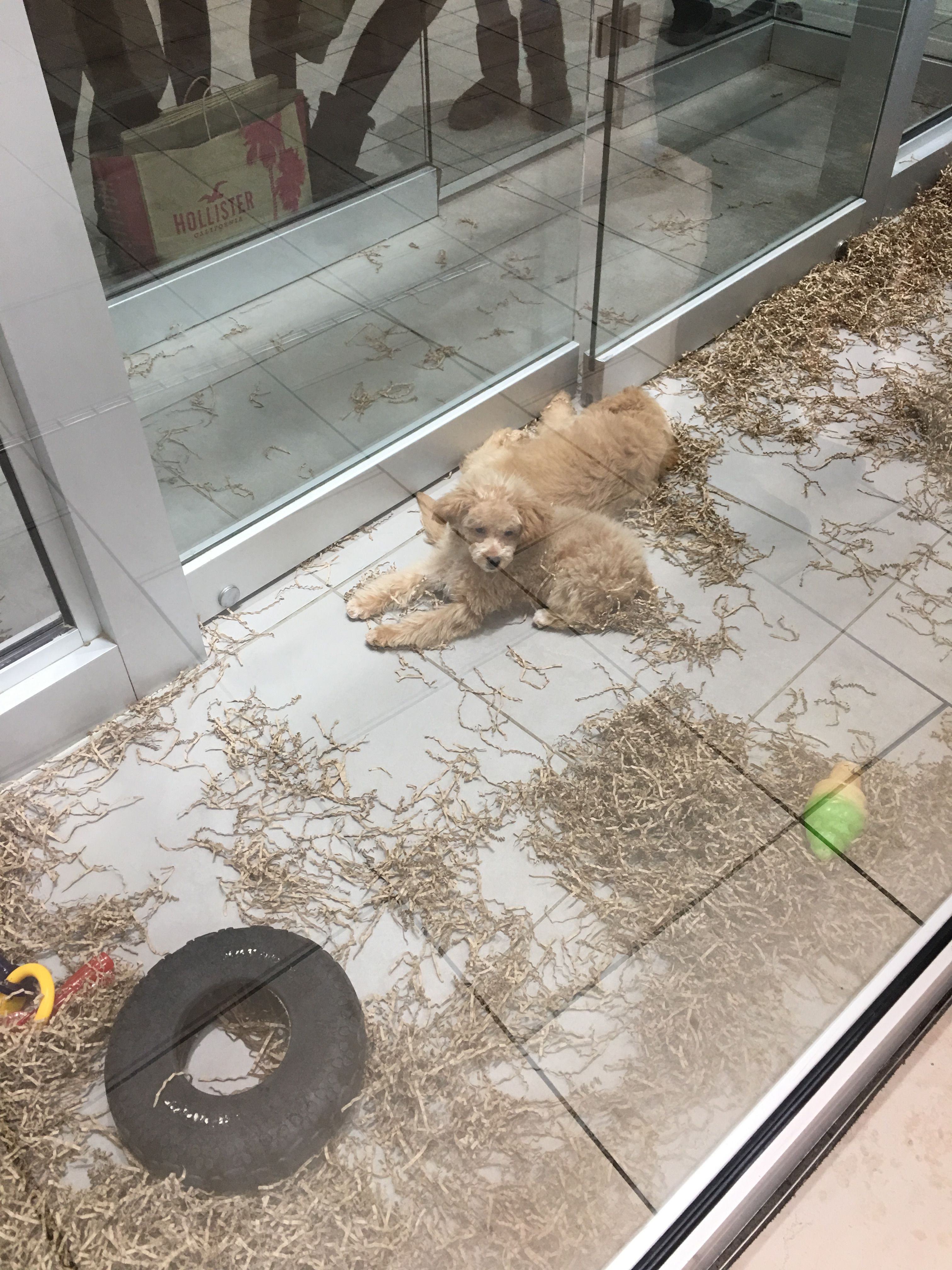 Bilder Mischlingshunde Kostenlos - Bilder Mischlingshunde Kostenlos