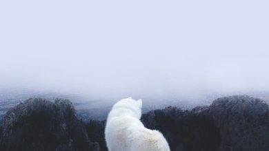 Bilder Süße Hunde Für Facebook 390x220 - Bilder Süße Hunde Für Facebook