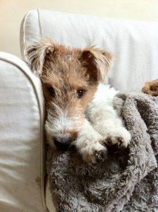 Bilder Süße Hunde Kostenlos 224x300 - Bilder Süße Hunde Kostenlos
