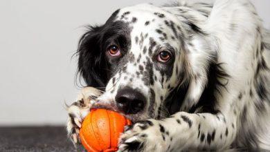 Bilder Süße Hunde Kostenlos Herunterladen 390x220 - Bilder Süße Hunde Kostenlos Herunterladen
