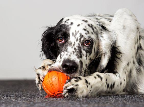 Bilder Süße Hunde Kostenlos Herunterladen - Bilder Süße Hunde Kostenlos Herunterladen