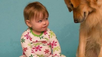 Bilder Schäferhund Für Facebook 390x220 - Bilder Schäferhund Für Facebook