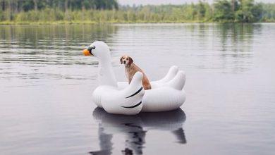Bilder Schäferhund Kostenlos 390x220 - Bilder Schäferhund Kostenlos