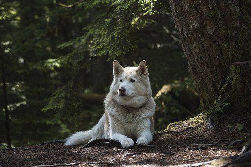 Bilder Schäferhund - Bilder Schäferhund