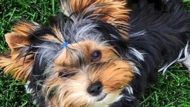 Bilder Verschiedener Hunderassen 390x220 - Bilder Verschiedener Hunderassen