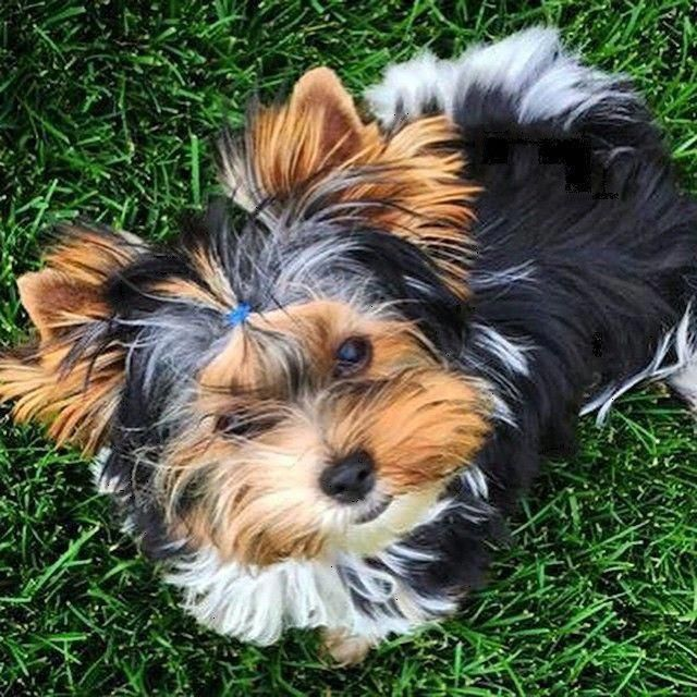Bilder Verschiedener Hunderassen - Bilder Verschiedener Hunderassen