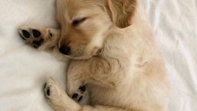 Bilder Vom Hund Für Facebook 390x220 - Bilder Vom Hund Für Facebook