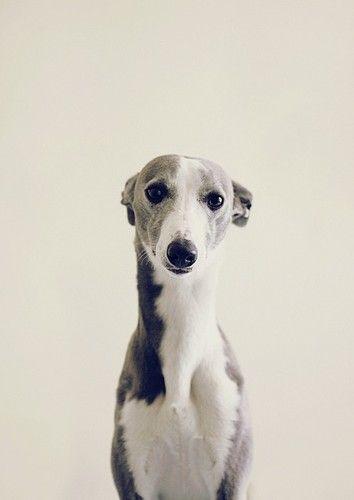 Bilder Vom Hund Kostenlos - Bilder Vom Hund Kostenlos
