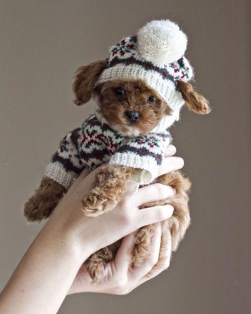 Bilder Vom Hund - Bilder Vom Hund